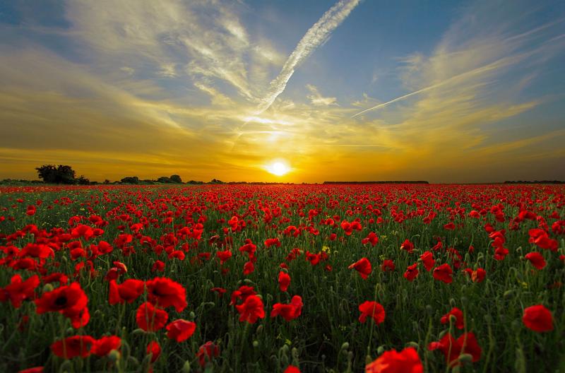 Die Kraft der Sonne ist groß - nutzen wir sie für eine schönere Welt